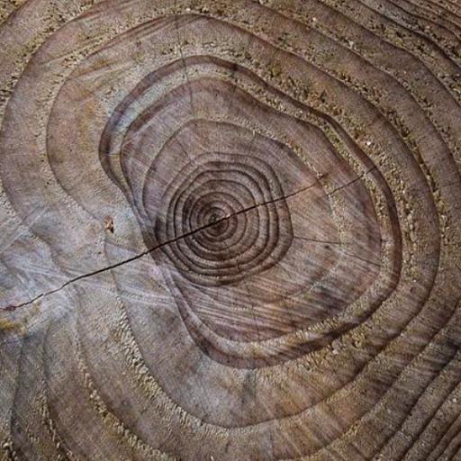 Astuce : Compter l'âge d'un arbre