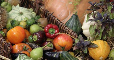 Autoriser la commercialisation des semences paysannes renforce la diversité des espèces