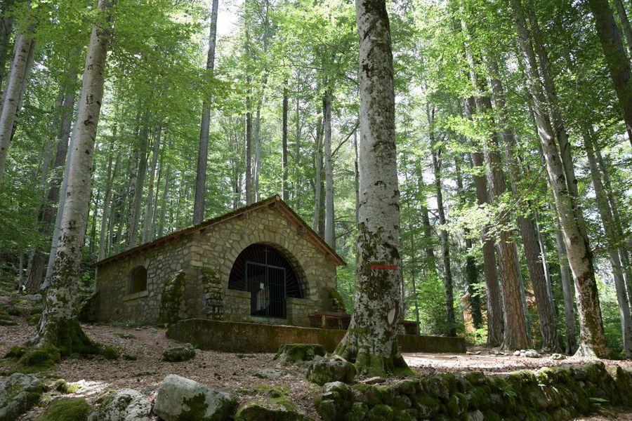 Vizzavona, une forêt unique au cœur de la Corse
