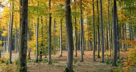 Cinq idées reçues sur la forêt