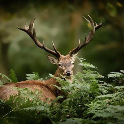 Quiz : Connais-tu les animaux de la forêt ?