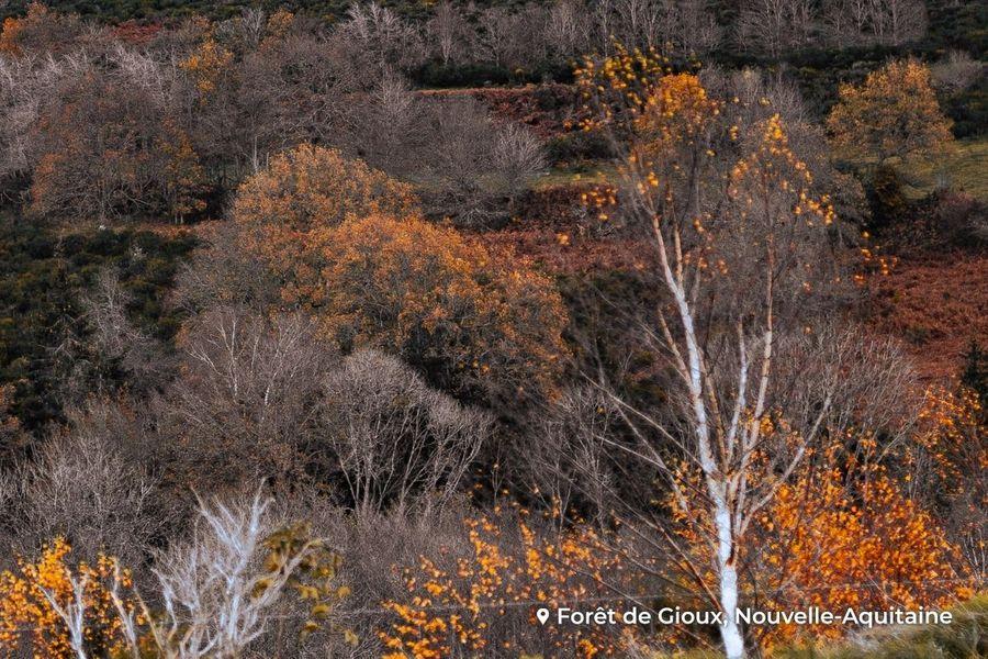 Les grandes forêts de France - Partie 1