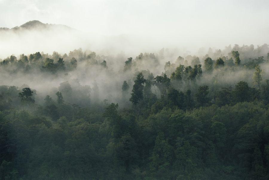 Quel est le cycle de vie d'un arbre ?