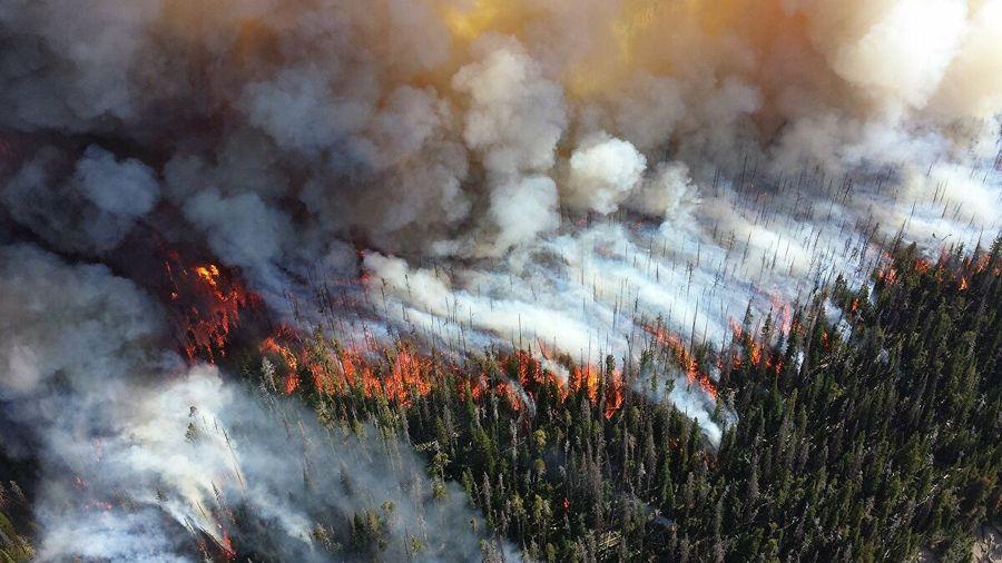 L'enjeu des dramatiques feux de forêt en Sibérie