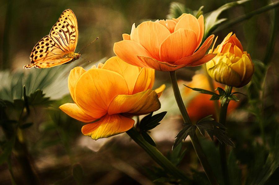 Journée mondiale de l'environnement : la biodiversité à l'honneur