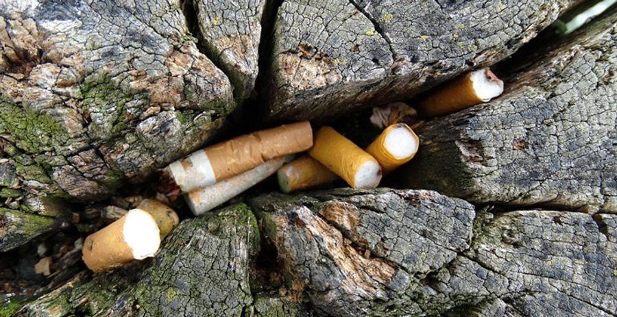 Fumer nuit gravement à l'environnement