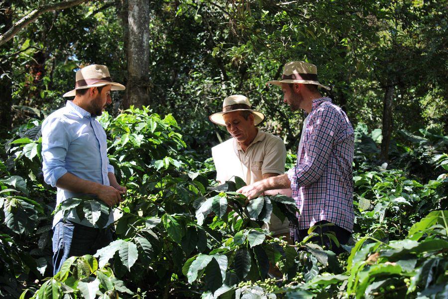 Café Création plante des arbres avec EcoTree