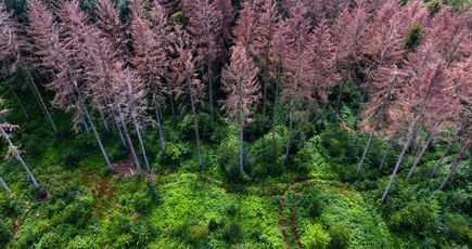 Le coût écologique et financier du réchauffement climatique