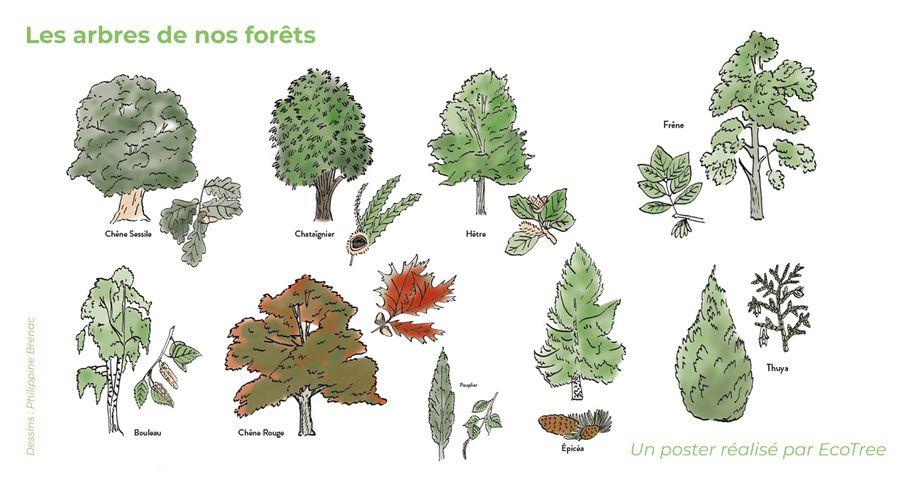 Comment reconnaître les arbres en forêt ?