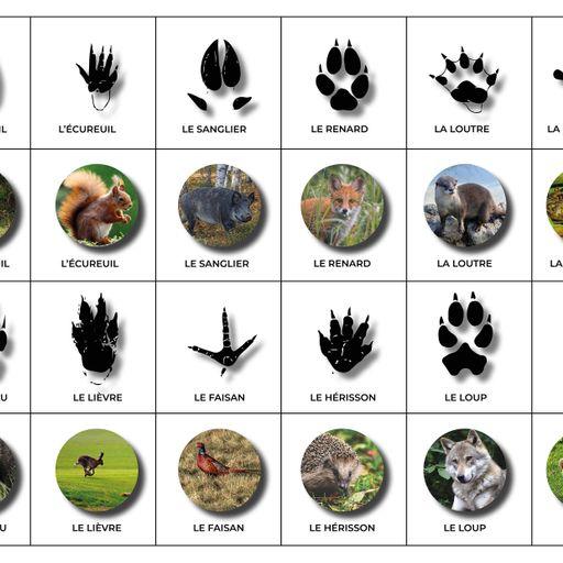 Mémory : Suivre à la trace les animaux de la forêt