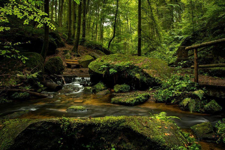 Plan de relance : un soutien à la filière forêt-bois