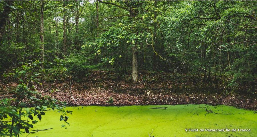 La Commission européenne mise sur les forêts pour la transition énergétique