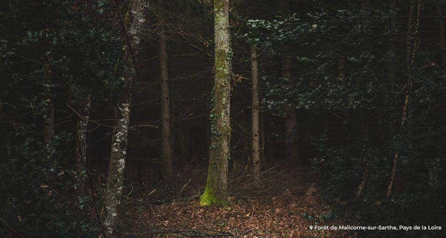 Les forêts sont-elles des puits de carbone ?