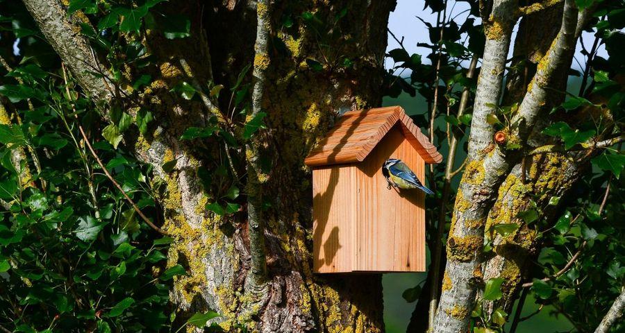 Pourquoi installer des nichoirs à oiseaux dans les forêts ?