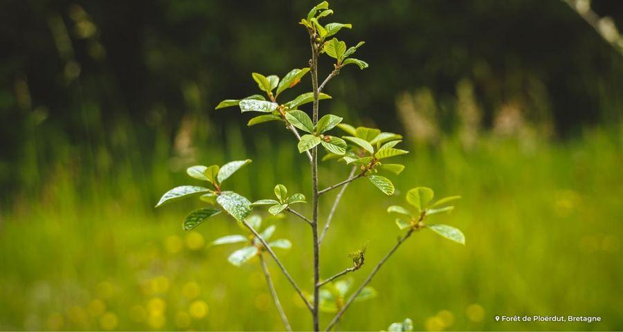 Trico, répulsif naturel pour protéger les arbres
