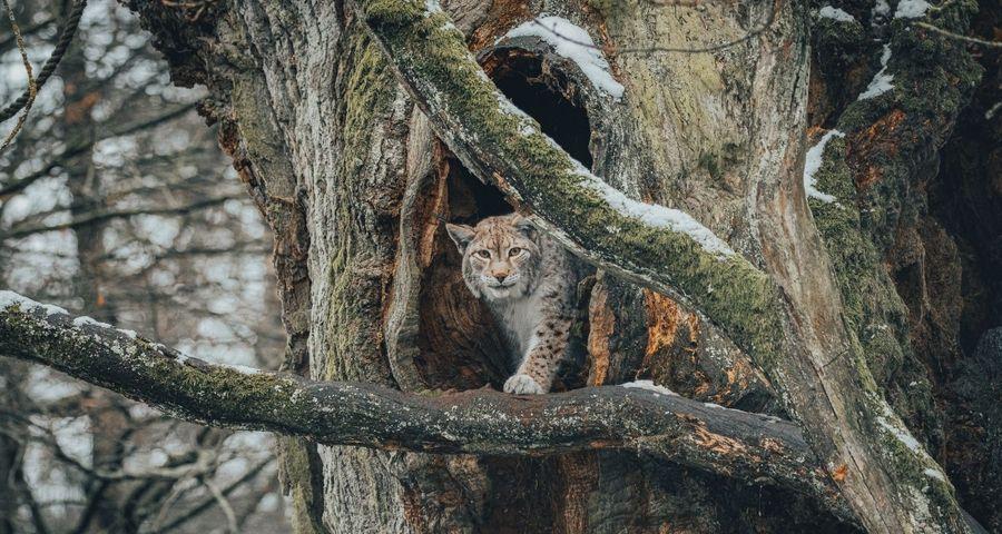 Quels sont les animaux forestiers menacés de disparition ?