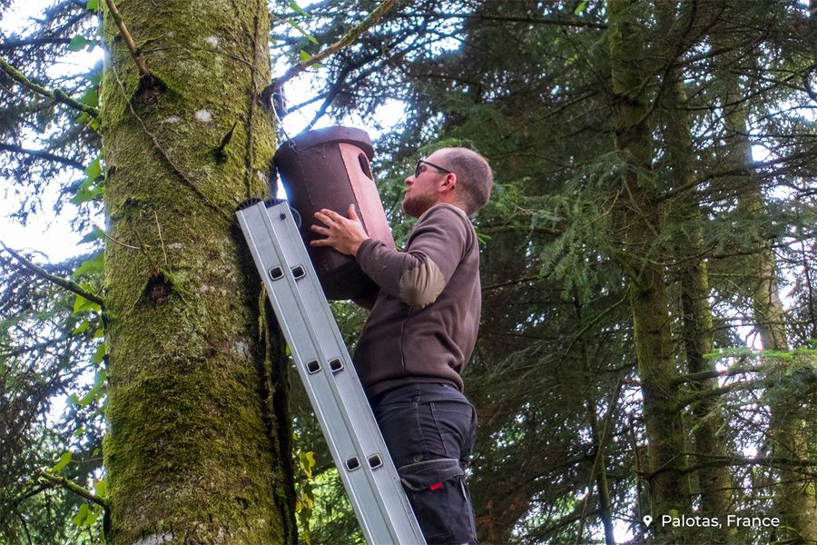 Why we're installing birdhouses in forests