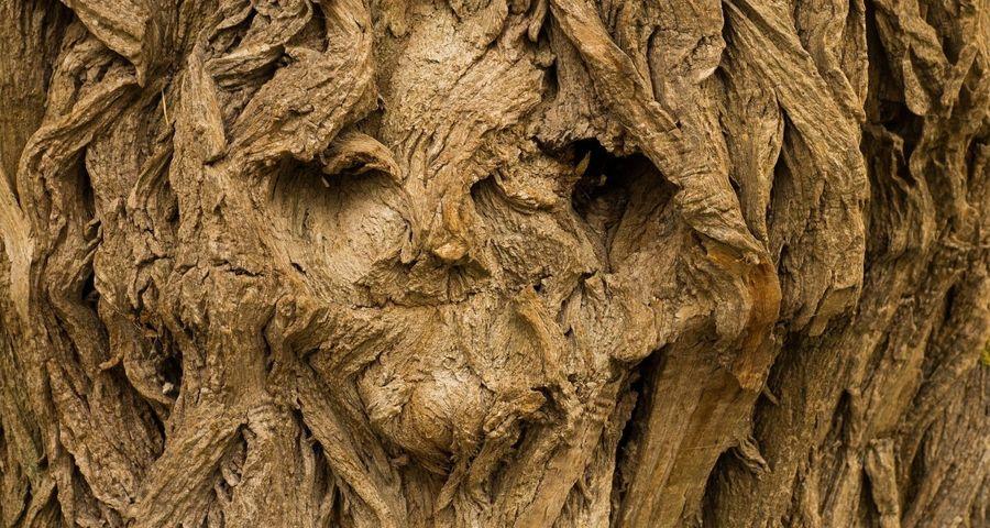 Quelle est l'origine des expressions avec le mot bois ?