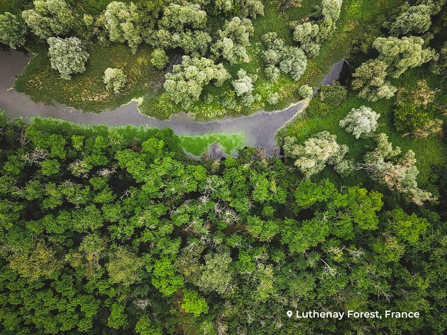 We've a whole lot of love for Luthenay forest